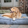 Up to 46% Off Boarding for Dogs at Yale Street Dog House