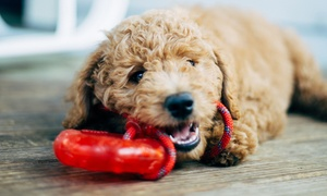 Up to 50% Off Bath Package for Dog @Ruby Clippers Pet Grooming at Ruby Clippers Pet Grooming, plus 6.0% Cash Back from Ebates.