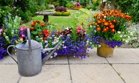 Lawn Mowing or Gardening Service: 1 ($35), 1.5 ($50) or 6 Man Hours ($195) from NZ Cleaning Crew (Up to $420 Value)