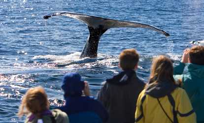 Things to do in victoria deals on activities in victoria bc image placeholder image for 59 for one 35 hour whale watching trip from outer island excursions solutioingenieria Gallery