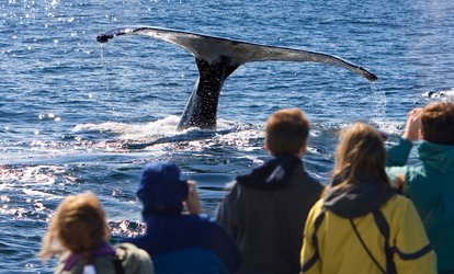 $53 for One 3.5-Hour Whale-Watching Trip from Outer Island Excursions ($109 Value)