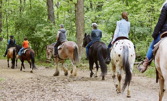 Paseo a caballo con clase, y refresco para 2 o 4 personas desde 24,90 € en Finca Paraíso