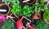 81% Off Growing Food in Small Gardens Course from Trendimi