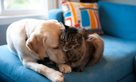 Revisión para perro o gato con opción a vacuna a elegir desde 14,95 € en Landeta