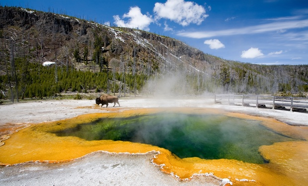 TripAlertz wants you to check out 8-Day National Parks Tour w/ Summer Travel from Gate 1 Travel. Price/Person Based on Double Occupancy.  8-Day Tour of Yellowstone and Grand Tetons - Yellowstone and Grand Teton Tour