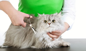 Park Veterinary Clinic - Emirates Park Zoo and Resort: Choice of Grooming Package for Cat, Dog or Bird at Park Veterinary Clinic - Emirates Park Zoo and Resort