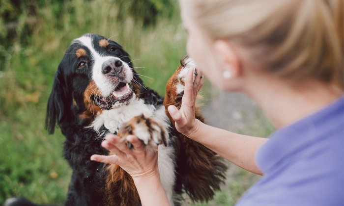 The paw patch veterinary hospital indianapolis in groupon the paw patch veterinary hospital deer creek three or six self serve dog solutioingenieria Image collections