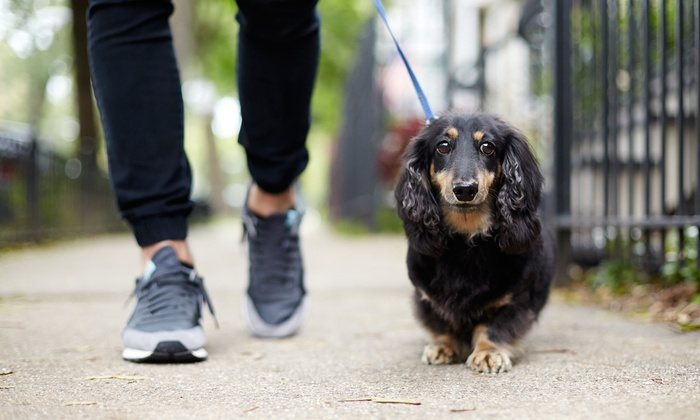 5, 10, or 20 Dog Walks 5 or 10 Days of Pet Visits from Fido's Following (Up to 55% Off)