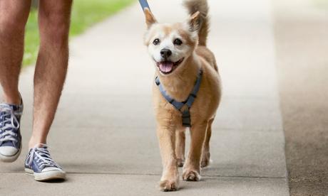 Sesión de peluquería para un perro de 6 a 30 kg desde 16,95 € en Paramascotas Oferta en Groupon