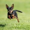 Full-Day Dog Daycare