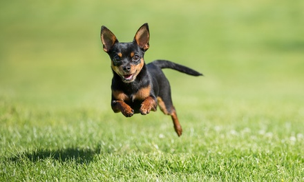 Full Day Doggy Daycare Assessment for One $13 or Two Dogs $26 at Fetch 'n' Fun Wellness and Daycare Up to $80