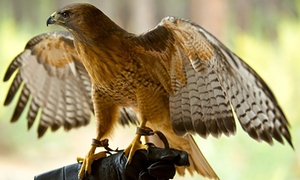 EZ Hawking: Hawk Walk for Up to Four at EZ Hawking (Up to 51% Off)