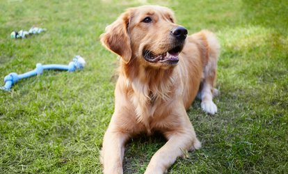 $20 for $50 to Spend on Doggy Daycare at Hanrob Pet Hotels, Multiple Locations