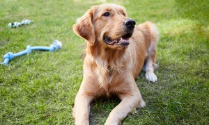 Hanrob Pet Hotels: $20 for $50 to Spend on Doggy Daycare at Hanrob Pet Hotels, Multiple Locations