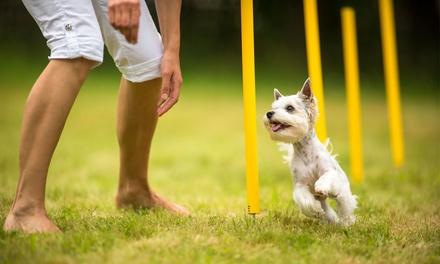 1 o 2 meses de curso de adiestramiento canino (1 hora a la semana) desde 14,90 € en Adercan