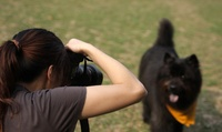 Pet Photoshoot with Eight Prints at Photography New Forest (97% Off)