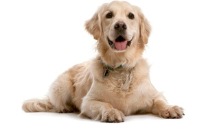 Reserved Barking: $99 for a Dog Training Consultation and Lesson ($240 Value)