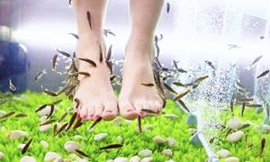 Sanitätshaus Arnold: Afterwork-Fisch-Spa-Programm inkl. Erfrischungsgetränk und Fußbad im Fish Spa Und Fußpflege Leonberg (22% sparen*)