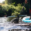 44% Off All-Day Paddleboard or Kayak Rental