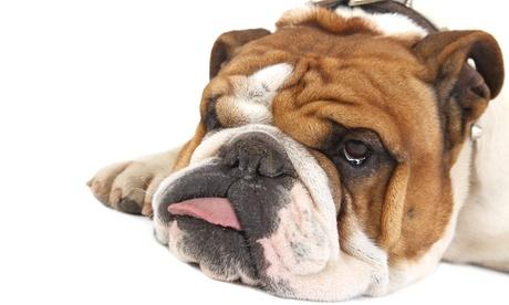 Estancia de 3, 7,16 días o 1 mes para 1 o 2 perros o gatos desde 24 € en Residencia Canina y Felina Barcelona