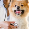 Up to 75% Off Annual Check-Up at Cooper City Animal Clinic