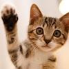 63% Off at Faithful Companions Animal Clinic