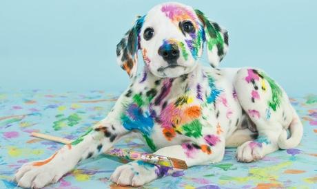 Photoshop-Onlinekurs Pinsel-Set oder Texturen-Paket bei PSD-Tutorials