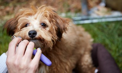 Haircut or Dog Bath at Pawsitively Groomed <strong>Pet</strong> Salon (Up to 49% Off)