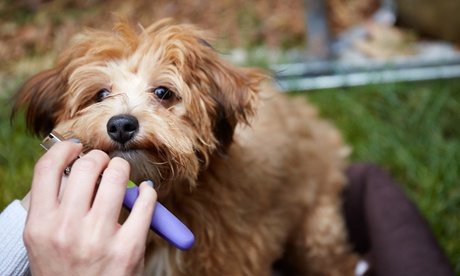 Full Body Groom for a Small, Medium, Large, or Extra-Large Dog at Affectionate Grooming (Up to 46% Off) 2bd1d288-270a-4fab-8cfd-00d36c20388f