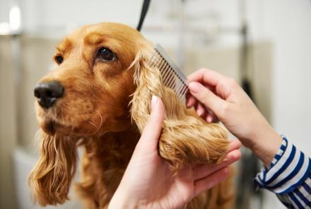 Sesión de peluquería canina con corte para perros de hasta 10 o 30 kilos desde 12,95 € en Perruras