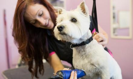 Sesión de peluquería con opción a corte para perros de hasta 25 kg desde 9,95 € en Lovedogs