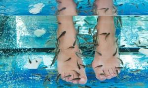 Fish and Spa: Fishpedicure de 20 minutes pour 1, 2 ou 3 personnes dès9,90 €à l'institut Fish and Spa