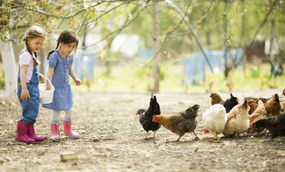 image for Farm Day with Two Lunchboxes, Animal Feed and Crazy Golf for Four at Highfields Happy Hens (67% Off)