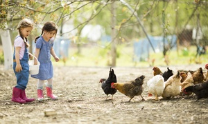 Highfields Happy Hens: Farm Day with Two Lunchboxes, Animal Feed and Crazy Golf for Four at Highfields Happy Hens (67% Off)