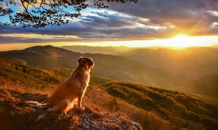 Curso de adiestramiento canino para situaciones de emergencia de hasta 200 horas Grupo Menta Siglo XXI