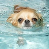 Up to 58% Off Dog Swim Packages at Alpha Dog Club