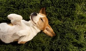 Pet Health Tests