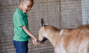 Randall Oaks Zoo: Admission, Animal Feed, and Pony Rides for Two or Family Admission at Randall Oaks Zoo (Up to 47% Off)
