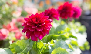Old Westbury Gardens: Admission for Two, Four, or Six to Old Westbury Gardens (Up to 47% Off)