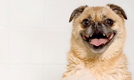 Doggy Bath for a Small, Medium, or Large Dog at Pet Avenue (Up to 58% Off)