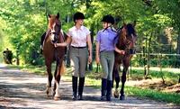 3 o 5 lezioni di equitazione per una o 2 persone da Circolo Ippico Hakuna Matata (sconto fino a 81%)