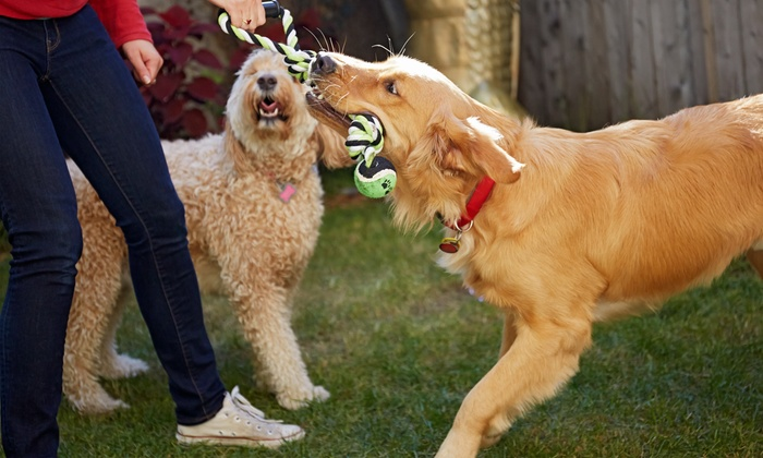 The Zuri Pet Spa & Resort - The Zuri Pet Spa & Resort: Three or Five Days of Daycare Services at The Zuri Pet Spa & Resort (Up to 64% Off)