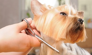 Boss The Pet Connection: Dog Grooming and Dental Cleaning at Boss The Pet Connection (Up to 51% Off). Four Options Available.
