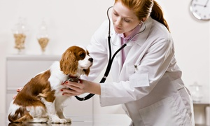 Wilkinson Animal Hospital: Exam and Vaccinations for a Dog or Cat, or Microchip for One Pet at Wilkinson Animal Hospital (Up to 55% Off)