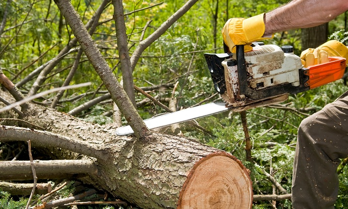 Pine Ridge Landscaping & Tree Services - Minneapolis / St Paul: $199 for $400 Toward Tree Services from Pine Ridge Landscaping & Tree Services