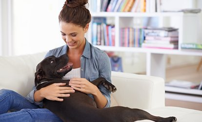 image for Balance Energy LED Light Therapy Session for <strong>Pet</strong> or Owner or <strong>Pet</strong> and Owner at Royal Dogs Gallery (Up to 48% Off)