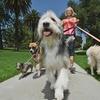 Dog-Walking Online Course