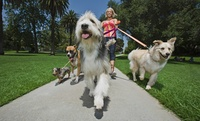 Dog Walking and Pet Sitting Professional Diploma from Online Academies (92% Off)