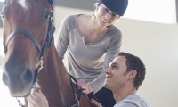 Up to One-Hour Private Horse Riding Lesson for One or Two at Moorwards Farm