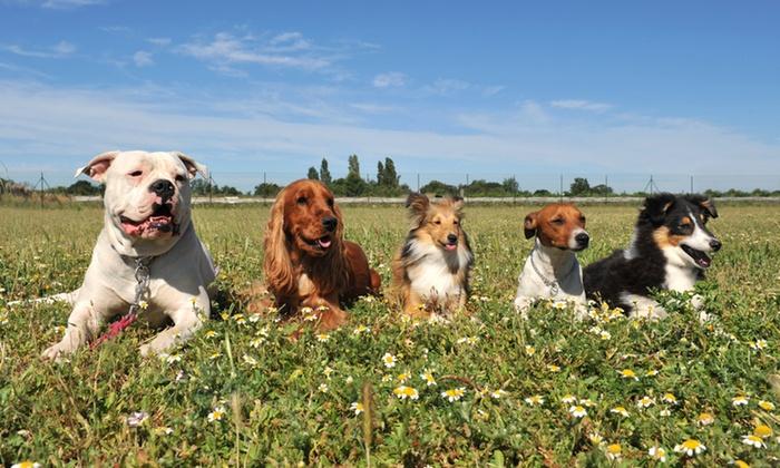 Carlos Hillson Dog Services - San Francisco: 10 or 20 Dog Walks from Carlos Hillson Dog Services (Up to 76% Off)